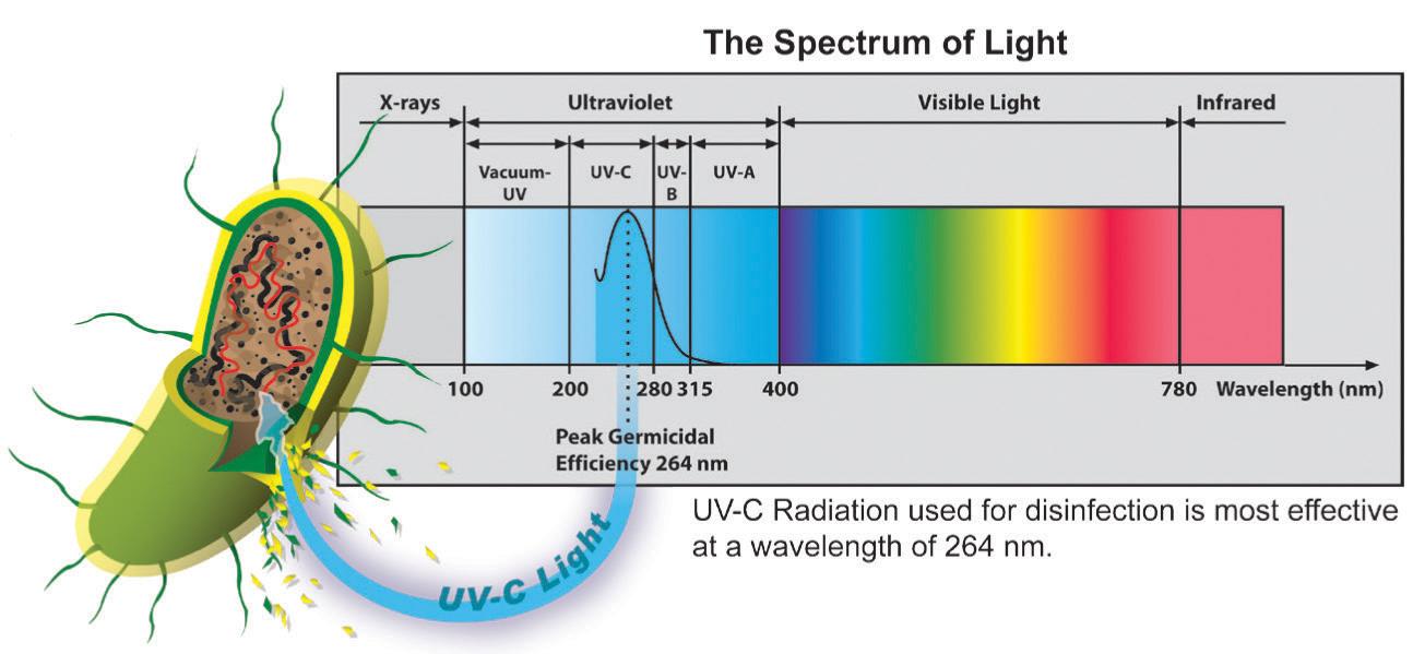 UV Light Spectrum
